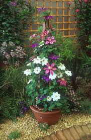 Growing Potted Climbing Plants  YouTubeWall Climbing Plants In Pots