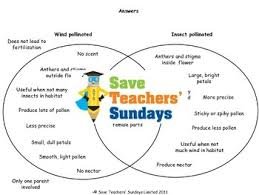 Accuracy And Precision Venn Diagram Wind Pollination And Insect Pollination Lesson Plan And Worksheets