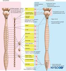 Vertebral Subluxation Chart Spine Diagrams With Nerves Wiring Diagrams