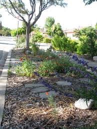 Small Picture Outdoor Garden Impressive Drought Tolerant Landscaping With