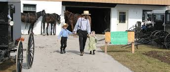amish dissertation  amish language sample essays and papers qrpl essays and papers