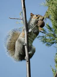 What to Feed <b>Squirrels</b>