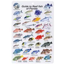 Card I Florida Fish B202 d Leisurepro -