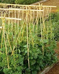 bamboo garden stakes. Bamboo Garden Stakes Outdoor Decorations