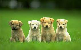 Cute Dog Wallpapers: HD, 4K, 5K for PC ...