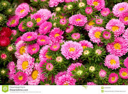 background of diffe color flowers