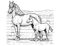 Horses Coloring Pages And Printable Activities 1