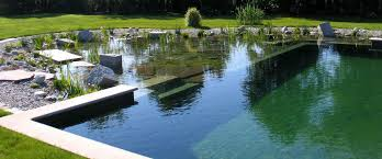 natural backyard swimming pool nsp