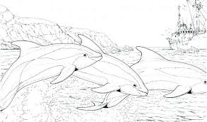 Fresh Dolphins Coloring Page D0858 Interesting Cute Baby Dolphins