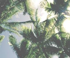 palm trees tumblr header. Interesting Tumblr Summer Palm Trees And Beach Image For Palm Trees Tumblr Header E