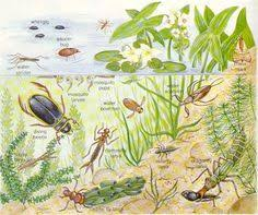 33 Best Pond Dipping Images Pond Dipping Pond Pond Life