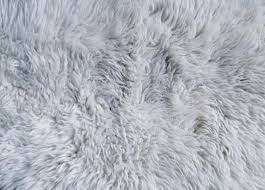 White fur rug texture Pattern Pictures free textures and free photos