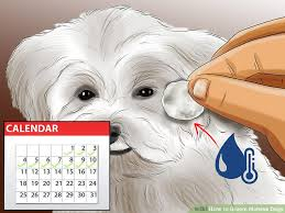 Hair Length Sample Chart Dog Grooming Hair Length Chart Luxury Things Your Dog