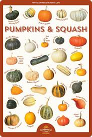 Gourd Identification Chart Downloads In 2019 Squash Varieties Home Vegetable Garden