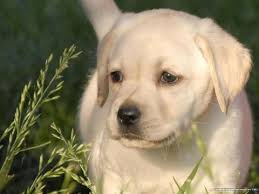 most beautiful dogs wallpapers.  Wallpapers Dog Inside Most Beautiful Dogs Wallpapers P