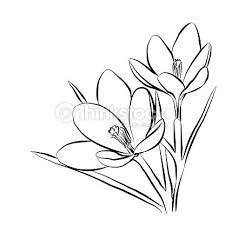 Krokus Blumen Elegante Vintagekarte Vektorillustration