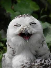 Image result for bird smile