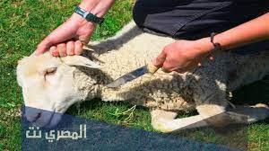 ماذا يقال عند ذبح الأضحية من أدعية الرسول صلى الله عليه وسلم - المصري نت