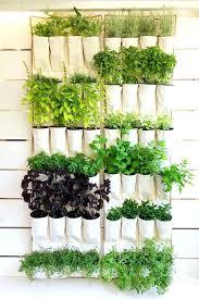 hanging wall garden hanging herb garden best hanging herbs ideas on herb wall wall herb hanging wall garden bunnings
