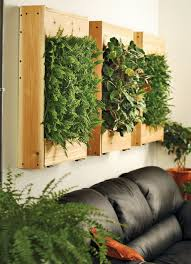 indoor plants ideas in living room wall