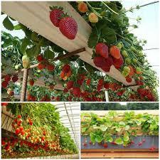 view in gallery rain gutter strawberry planter wonderfuldiy