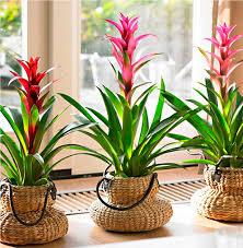 Secondo questo principio, le piante vanno annaffiate soltanto quando il composto da vaso è completamente asciutto. Piante Fiorite Da Appartamento