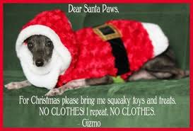 Image result for silly christmas animal pictures with captions