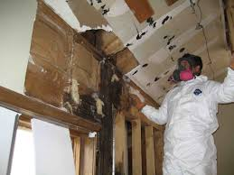 black mold detector. Wonderful Black What Happens During A Mold Remediation To Black Detector