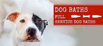 lucky dog sports bar indoor outdoor dog park boarding daycare baths too