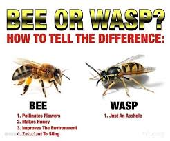 Wasp Identification Chart