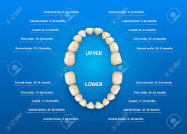 Dental Numbering Chart Children Mouth With Tooth Numbering Chart On Blue Background