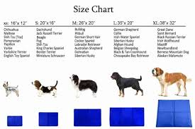 Irish Terrier Weight Chart 48 Veracious Chihuahua Weight Chart Growth