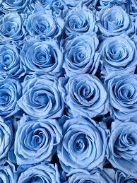 Blue roses wallpaper, Rose wallpaper