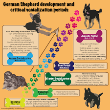 German Shepherd Puppy Food Chart German Shepherd Puppy Training Guide