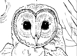 Small Picture Barn Owl Coloring Pages GetColoringPagescom