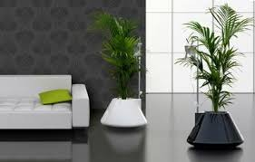 How to use plants in home decor