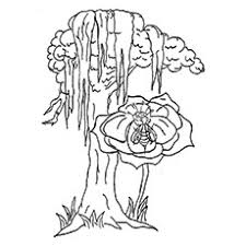coloring pages of tree. Exellent Pages With Coloring Pages Of Tree T