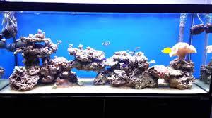 Acquario marino tropicale 3 youtube