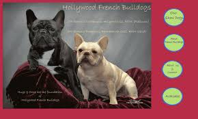 breeders of quality chion french bulldogs in the greater los angeles area puppies available occasionally french bulldogs are not for everyone