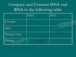 Ppt Dna Rna And Protein Synthesis Powerpoint Presentation