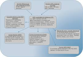 Flow Chart Overview Of Experimental Steps Taken Plus The
