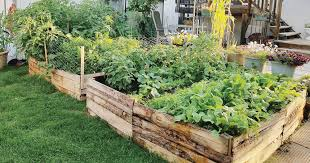 raised bed out of pallet boards