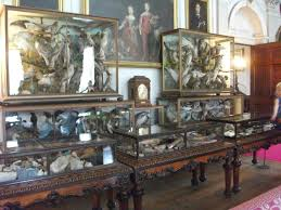 Antlers and taxidermy trophies lined medieval Gothic halls. The Victorians  also enjoyed a passion for taxidermy, especially birds.