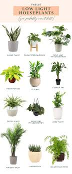 Low Light Indoor Twelve Low Light Indoor Plants You Probably Cant Kill