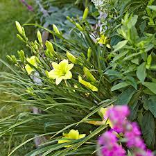 plant perennials shrubs and trees