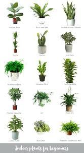 best indoor office plants. Good Indoor Plants Great Office Image Of Best  Ideas On F