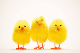 Image result for easter chick