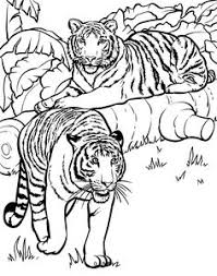 Small Picture Jungle Tiger Coloring Page Worksheets Tigers and School
