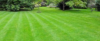 Jardin Gazon Arbres