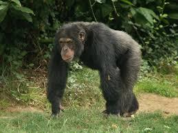 """Résultat de recherche d'images pour """"vallée des singes"""""""